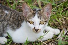 Kitten on grass field Royalty Free Stock Photo