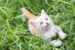 Kitten in the grass Royalty Free Stock Images