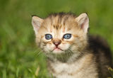 Kitten on  grass Royalty Free Stock Photography