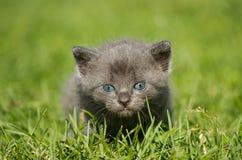 Kitten on a grass. Kitten on the green grass Stock Image