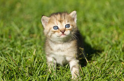 Kitten on the  grass Royalty Free Stock Images