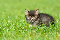 Kitten on the grass Stock Photos