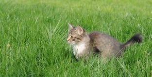 Kitten in grass Stock Image