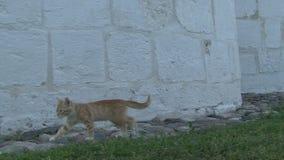 Kitten on the grass stock video footage