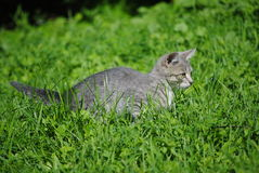 Kitten in the grass Royalty Free Stock Photography