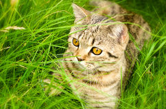 Kitten in the grass Royalty Free Stock Photos