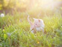 Kitten in the grass Stock Photos