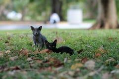 Kitten on grassy field Stock Photo