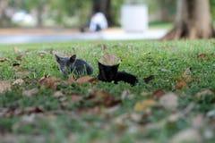 Kitten on grassy field Stock Image