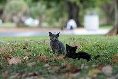 Kitten on grassy field Royalty Free Stock Image