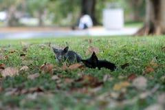 Kitten on grassy field Royalty Free Stock Photos