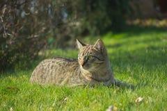 Kitten of gray tabby cat Stock Photography