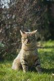 Kitten of gray tabby cat Royalty Free Stock Photography