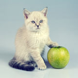 Kitten with green apple Stock Images