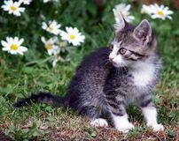 Kitten on green field. Cute kitten playing on green field stock photos