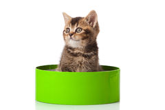 Kitten in green gift box Stock Photography