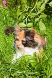 The kitten is on the green grass Stock Images