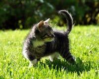 Kitten on green grass Royalty Free Stock Photos