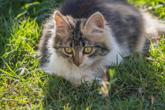 Kitten on green grass Royalty Free Stock Photography