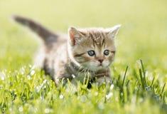 Kitten in green grass stock photo