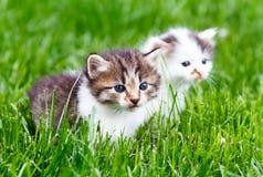 Kitten in the green grass. Little kitten in the green grass Stock Photo