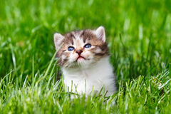 Kitten in the green grass Stock Photos