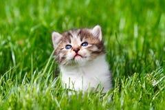Kitten in the green grass. Little kitten in the green grass Stock Photos