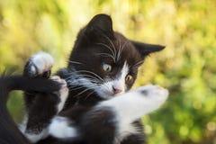 Kitten on green grass Stock Photos