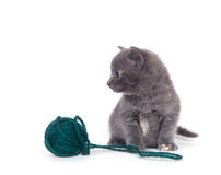 Kitten and green yarn Royalty Free Stock Photo