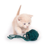 Kitten and green yarn Stock Image