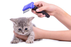 Kitten grooming comb Royalty Free Stock Images