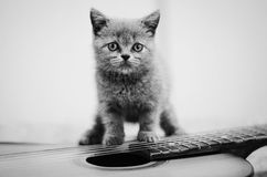 Kitten on a guitar. A black and white image of a blue British kitten standing on an acoustic guitar stock photos