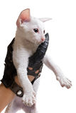 Kitten in hand Stock Image