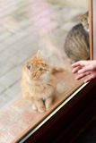 Kitten and Hand Royalty Free Stock Image