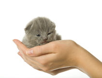 Kitten in hand Royalty Free Stock Photography