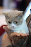 The kitten on hand closeup Royalty Free Stock Images