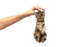 Kitten on a hand Royalty Free Stock Photos