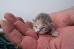 Kitten hand Stock Image