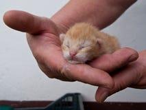Kitten hand Stock Photo