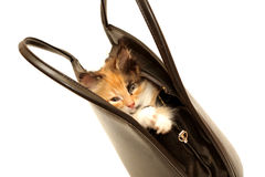 Kitten in handbag isolated on white Stock Images