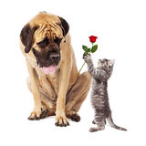 Kitten Handing Big Dog Rose Flower royalty-vrije stock fotografie