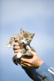 Kitten in hands Stock Photography
