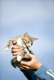 Kitten in hands Royalty Free Stock Photos