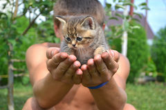 Kitten  in the hands of man Stock Photography