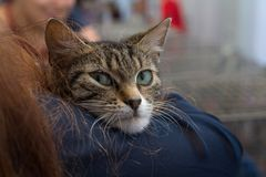 Kitten in the hands of a volunteer in a shelter for homeless animals Royalty Free Stock Photography