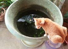 Kitten hang on basin try to drink water Stock Photography