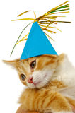 Kitten with hat Stock Image