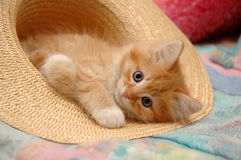 Kitten in hat Stock Photography