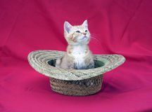 Kitten in a hat Stock Photos