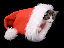 Kitten in hat Royalty Free Stock Photography